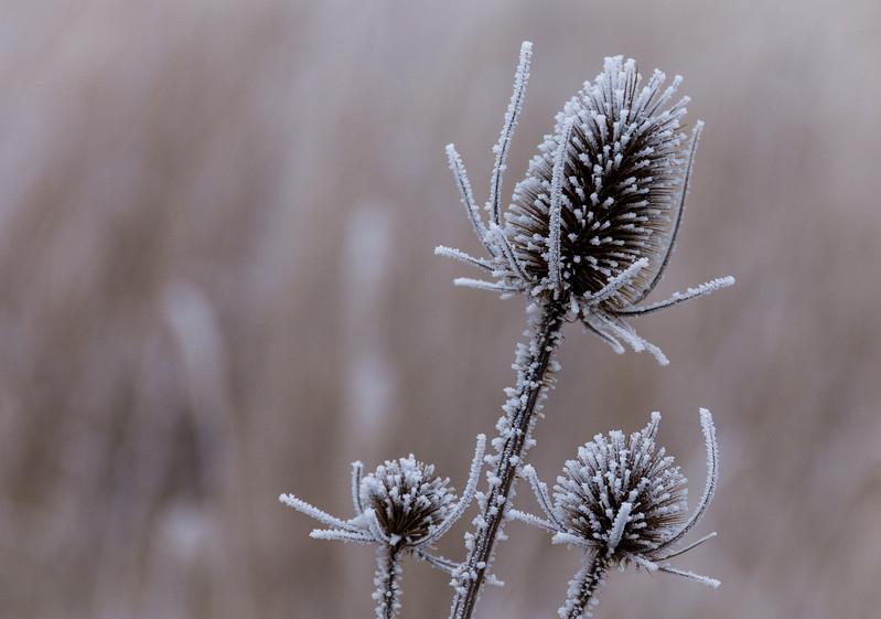 Frozen Beauty, near Markkleeberg, Germany