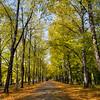 Autumn in Clara-Zetkin-Park, Leipzig, Germany