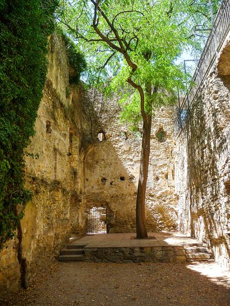 Tree in Captivity, Girona, Spain