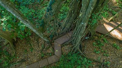 Walk through fig