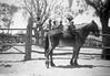 1958 Horse riding lessons Gogo