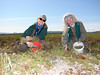 Ann Claerbout (Alaska State Office) and Randy Meyers (Central Yukon Field Office) collecting sedges along drained lake beds in northwestern Alaska for the Seeds of Success Program.