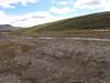Rocky Mountain goldenrod - Solidago multiradiata var. multiradiata (SOMUM)