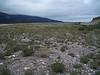 Field sagewort - Artemisia campestris ssp. borealis (ARCAB2)