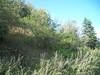 Taimyr catchfly - Silene taimyrensis (SITA)