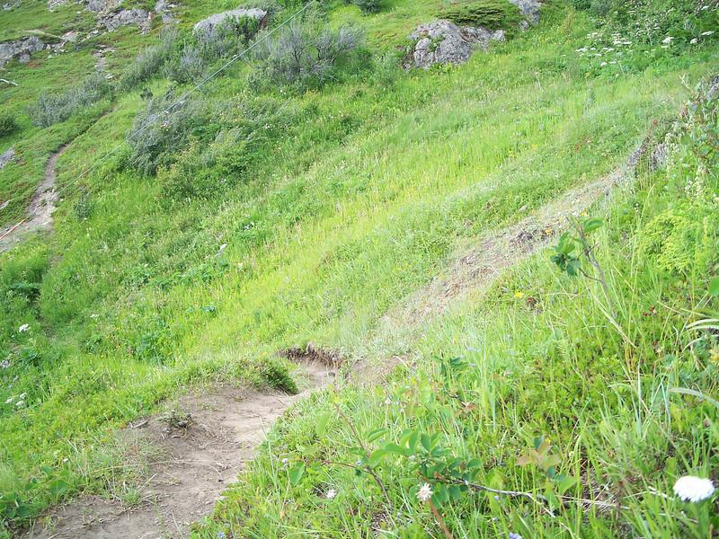 Alaska blue-eyed grass - Sisyrinchium littorale (SILI4)