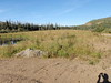 Slender wheatgrass - Elymus trachycaulus ssp. trachycaulus (ELTRT)