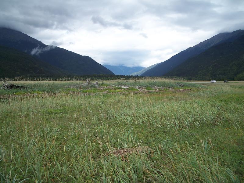 Pacific silverweed - Argentina egedii (AREG)