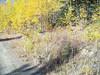 Siberian yarrow - Achillea sibirica (ACSI)