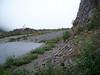 Kamchatka rockcress - Arabis kamchatica (ARKA6)