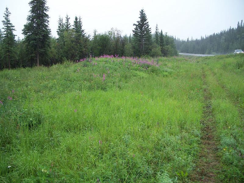 Closedhead sedge - Carex norvegica ssp. inferalpina (CANOI)