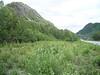Drummond's mountain-avens - Dryas drummondii (DRDR)