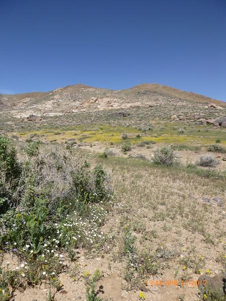 CA170-205-AMTE- habitat