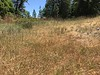 California oatgrass - Danthonia californica (DACA3)