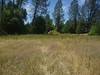 Great Valley gumweed - Grindelia camporum (GRCA)