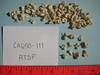spinescale saltbush - Atriplex spinifera (ATSP)