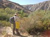 Seed Collection; hairy yerba santa - Eriodictyon trichocalyx (ERTR7)