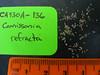 Narrowleaf suncup - Camissonia refracta (CARE2)