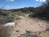 Yuma sandmat - Chamaesyce setiloba (CHSE8)