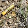 plains flax - Linum puberulum (LIPU4)