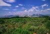 Plant monitoring of Harrington's beardtongue - Penstemon harringtonii (PEHA11) at Red Hill, Gypsum, CO. Photo by Dale Swenarton.