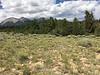 Colorado rubberweed - Hymenoxys richardsonii