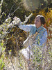 Alderleaf mountain mahogany - Cercocarpus montanus (CEMO2) being collected by Carol Dawson.
