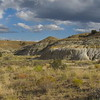 mound saltbush - Atriplex obovata (ATOB)