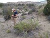 Badlands mule-ears - Scabrethia scabra (SCSC15)