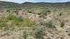 mesa dropseed - Sporobolus flexuosus (SPFL2)