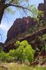Zion National Park - Pine Creek