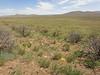 basalt milkvetch - Astragalus filipes (ASFI)