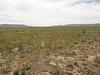 curvepod milkvetch - Astragalus curvicarpus (ASCU4)
