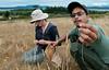 Seed collection in San Juan Islands, Washington.