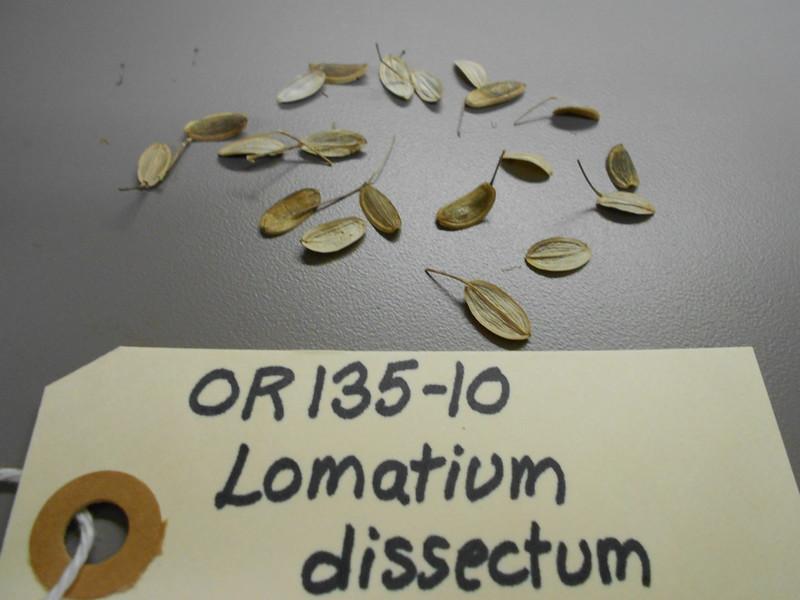 fernleaf biscuitroot - Lomatium dissectum (LODI)