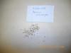Annual agoseris - Agoseris heterophylla (AGHE2)