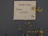 Blue Mountain prairie clover - Dalea ornata (DAOR2)