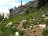 Mountain monardella - Monardella odoratissima (MOOD)