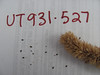 Nettleleaf giant hyssop - Agastache urticifolia (AGUR)