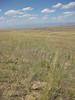 Bluebunch wheatgrass - Pseudoroegneria spicata ssp. spicata (PSSPS)