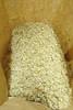 Yellow rabbitbrush - Chrysothamnus viscidiflorus (CHVIV2)