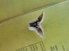 Woollypod milkvetch - Astragalus purshii (ASPU9)