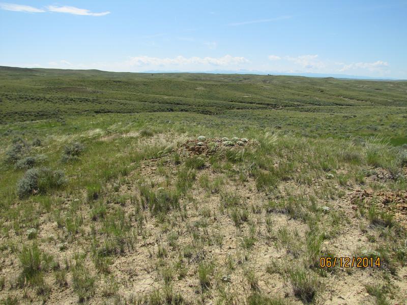 Hooker's desert sandwort - Arenaria hookeri ssp. desertorum (ARHOD)
