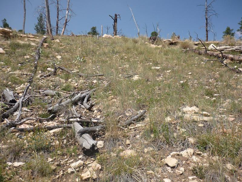 Ballhead sandwort - Arenaria congesta var. congesta (ARCOC4)