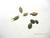 slimflower scurfpea - Psoralidium tenuiflorum (PSTE5)