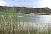 Common reed - Phragmites australis (PHAU7)