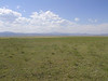 Buffalograss - Bouteloua dactyloides (BODA2)