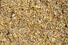 Basindaisy - Platyschkuhria integrifolia (PLIN7)