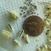 Eldorado larkspur - Delphinium hansenii (DEHA)