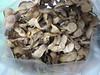 Catclaw acacia - Acacia greggii (ACGR)